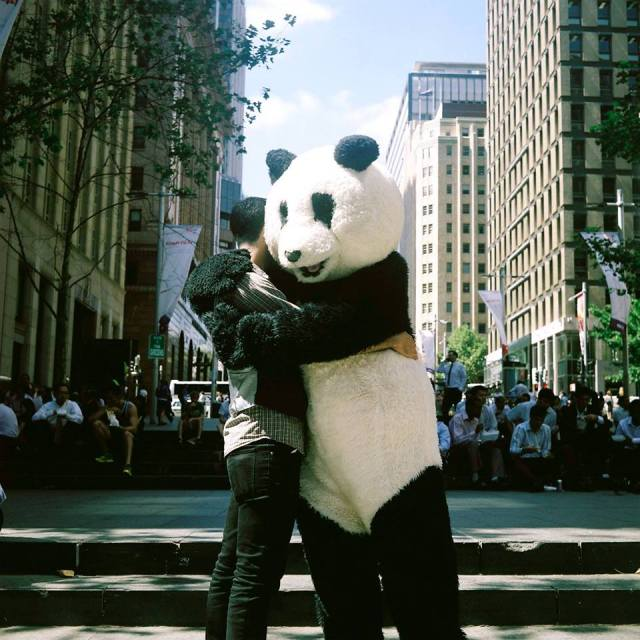 bud panda