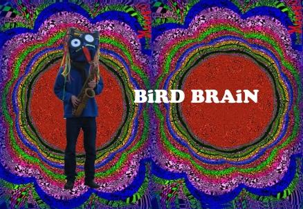 Hi Bird Brain